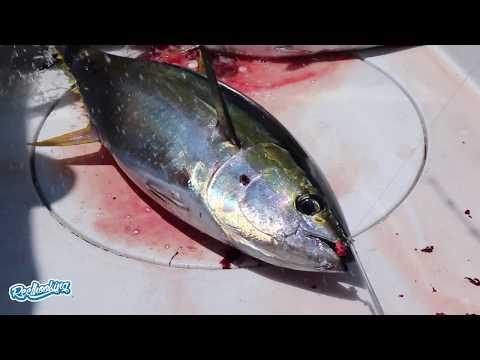 Costa Rica Yellow Fin Tuna At Los Sueños Resort And Marina