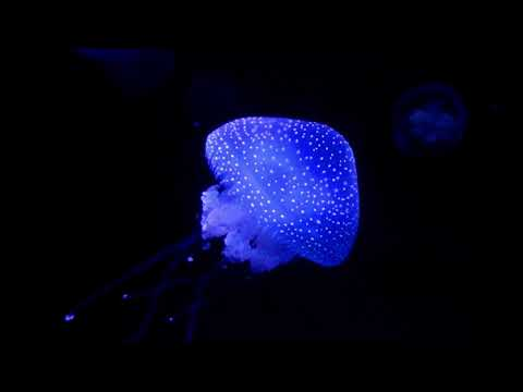Blue Jellyfish - Dark Sea Lights