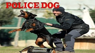 Top 5 Police Dogs