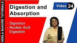 Digestion and Absorption - Digestion - Nucleic Acid Digestion