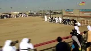Dogs Racing in Saudi Arabia What a competation HD VIDEO 2018