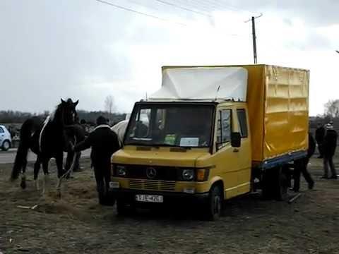 Skaryszew 2012 -koński targ