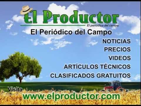 Download Periódico del Ecuador - Elproductor.com
