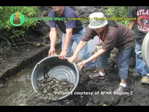 Department Of Agriculture-Bureau Of Fisheries & Aquatic Resources Reg. 2: Projects & Programs Part 1