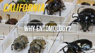 Why Entomology? – Bugged, Episode 3