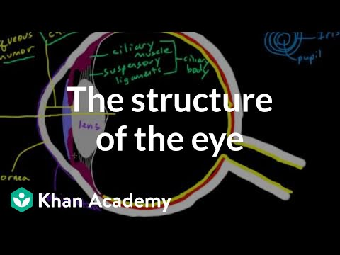 The structure of the eye  Processing the Environment  MCAT  Khan Academy