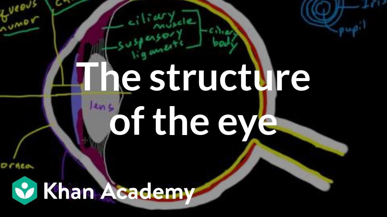 medium resolution of label the eye diagram answer
