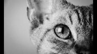 知られていない猫の雑学40選 今回は動物のン中でも大人気の 猫について...