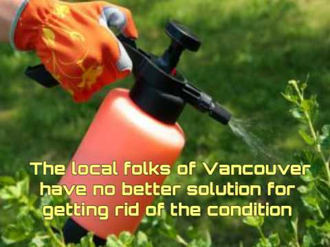 Gain assurance of pest control in Vancouver with us