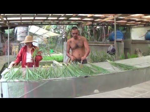 "Organic Farming in the Philippines (reality TV, episode 20: ""ecological vegetables, no compromise!"")"