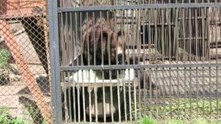 Медведь в минском зоопарке.