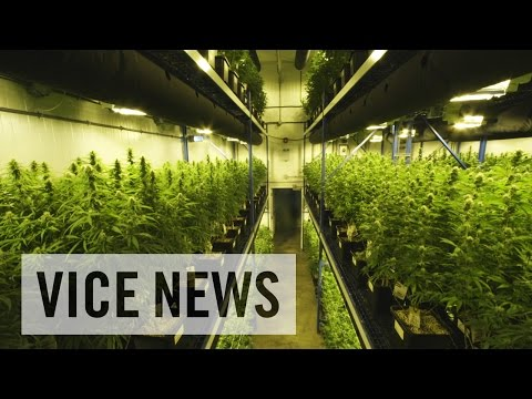Inside America's Billion-Dollar Weed Business: The Grass is Greener (Trailer)