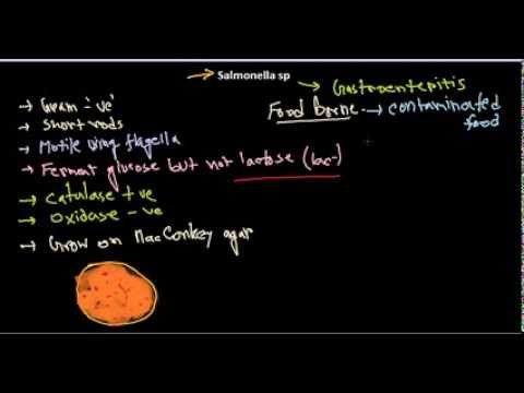 Salmonella introduction