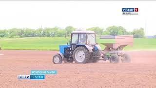 Новые технологии Почепского фермера