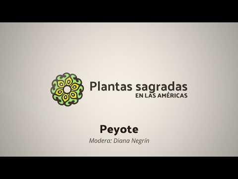 Peyote: Territory, Roots and Conflict | Plantas Sagradas en las Américas