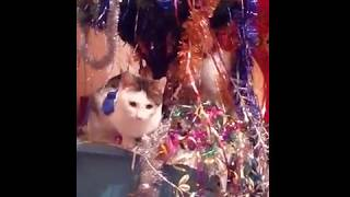 Коты против елки/Cats vs Christmas trees