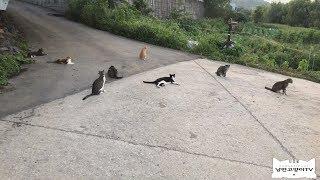 무더운 여름 저녁7시의 길고양이 낙원The cat paradise at 7 p.m.