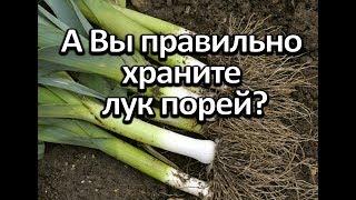 Лук порей! Если правильно хранить - очень много витамина С. А вы правильно храните?