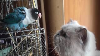 О чем говорят попугай и кот