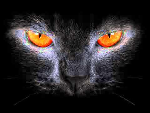 AUDIOBOOK - The Black Cat - Edgar Allan Poe