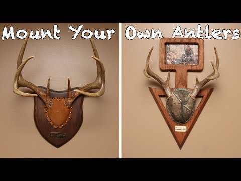 How To Mount Your Own Antlers On A Budget (Cheap DIY Project)