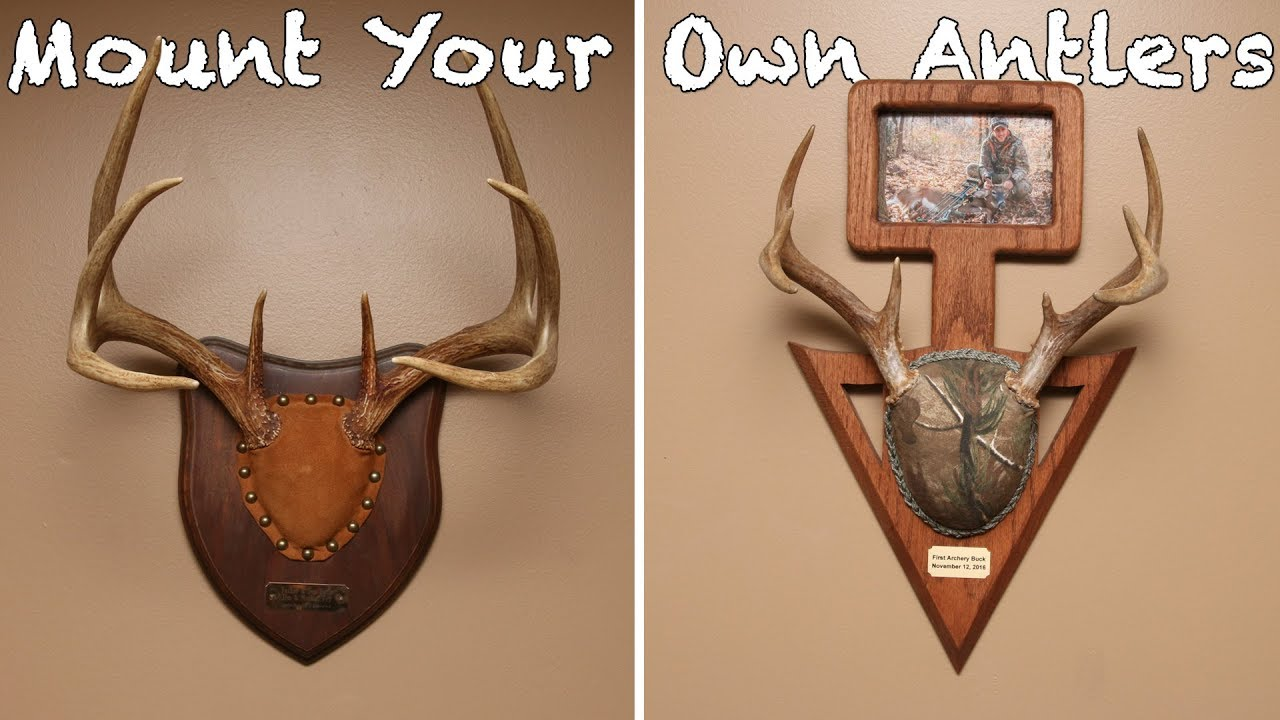 How To Mount Your Own Antlers On A Budget Cheap Diy Project Youtube