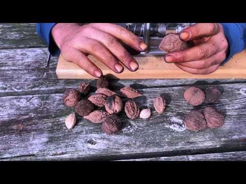 Master Nut Cracker - Incredible Tool!