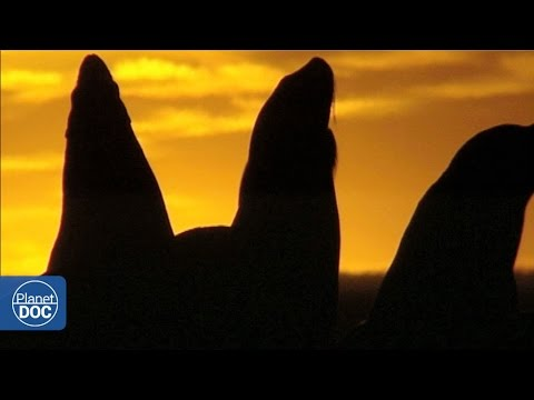 Patagonia: Sunset on the Coast