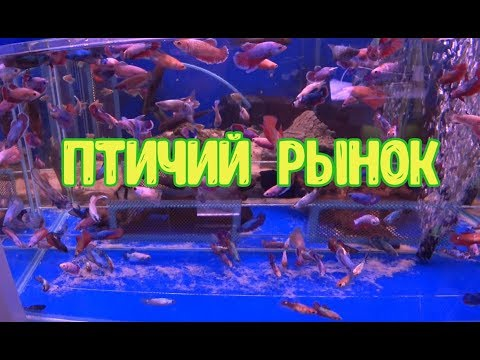 Обзор Московского птичьего рынка.