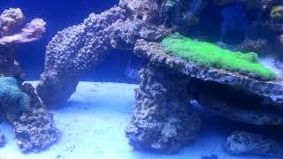 Video 220 gallon reef tank update..finally after a long abscence download MP3, 3GP, MP4, WEBM, AVI, FLV Oktober 2018