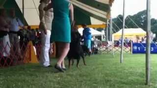 Kk Going Best Of Breed, Moore County Kennel Club.