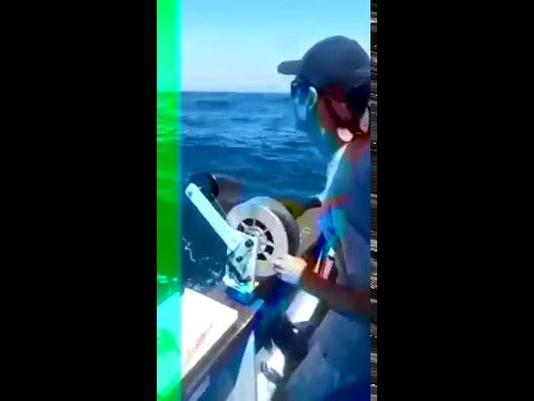 Bluenose caught in Durban Offshore (part 2)