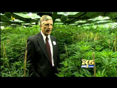 Rocky Mountain High: Colorado's Medical Marijuana Industry, Part 1