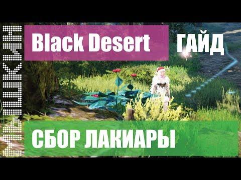📣 Black Desert. Сбор Лакиары. Практический гайд