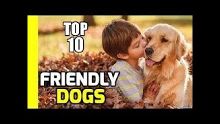 top 10 Best Dogs friendly for Kids and Families