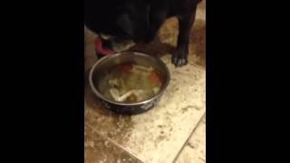Chicken Soup For A Pug!