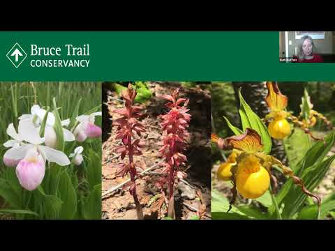 Webinar - Tips On Hiking The Bruce Trail End To End