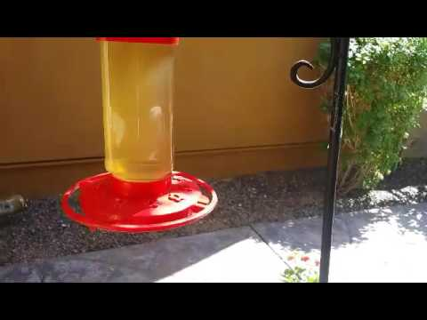 how to keep ants off your hummingbird feeder youtube. Black Bedroom Furniture Sets. Home Design Ideas