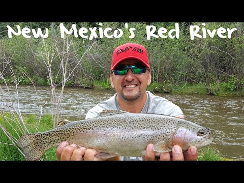 Trout Fishing New Mexico's Red River