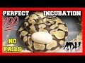 - HOW TO INCUBATE BALL PYTHON EGGS THE RIGHT WAY