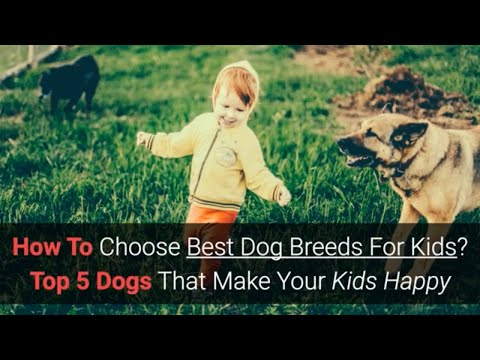 How To Choose Best Dog Breeds For Kids? Make Your Kid Happy