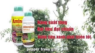 Pepper cultivation in Vietnam - Chap 1