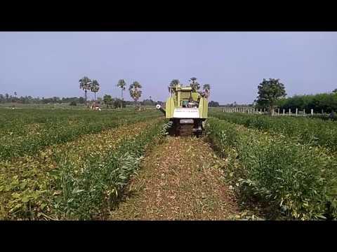 Greengram  Harvesting by using Harvestor