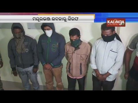 4 hunters arrested from Mayurbhanj's Udala; 2 Pangolins Rescued   Kalinga TV