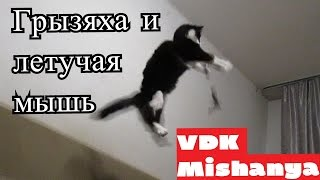 Кошка Пушинка младшая поймала летучую мышь