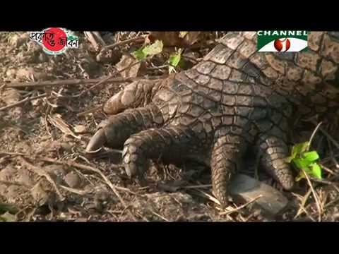 Nature and Life - Episode 161 (Saltwater Crocodile)