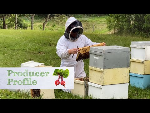 Beekeeping tips from a commercial apiarist