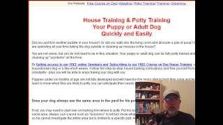 How to House Train Your Chihuahua Puppy - Today!
