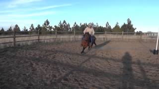 Awesome Welsh Pony For Sale In Denver Co