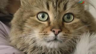 Кошкам и собакам пора делать прививки.